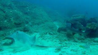 Scuba Diving The Prison Paradise Of Coiba Island, Panama