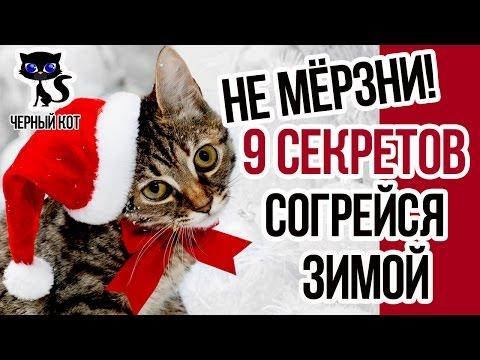 Вопрос: Можно ли кота выпускать на улицу при морозе – 20?