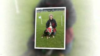 The Academy Of Modern Canine Behaviour & Training