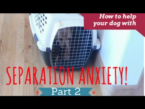 How to Help your Dog Overcome Separation Anxiety