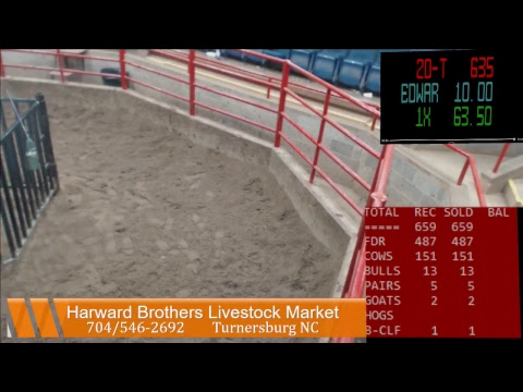 Harward Brothers Livestock Mkt Sale Stream