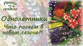 ОБЗОР ОДНОЛЕТНИХ ЦВЕТОВ, которые не подведут! Придайте ярких красок своему участку!!!