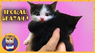 Раздаем спасенных котят в добрые руки