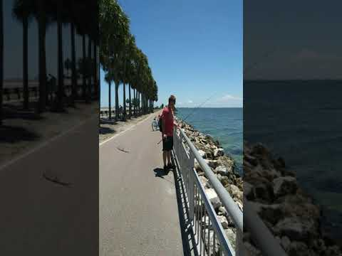 Electric Bike And Scooter Sight Fishing On Courtney Campbell Causeway In Tampa