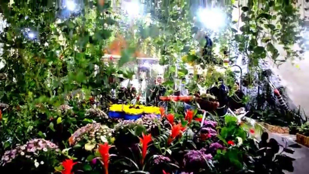 حديقة الفراشات في دبي Youtube