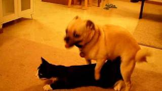Dog Raping Cat part 2!!!