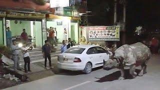 شاهد.. وحيد القرن يتجول في شوارع نيبال | صحيفة الاتحاد