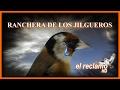 RANCHERA DE LOS JILGUEROS mp3