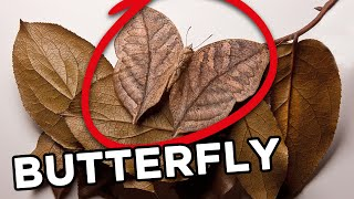 10 Amazing Camouflaging Techniques