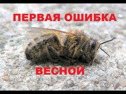 Пчёлы разлетелись весной. Первый плачевный облёт семьи. Недостаток корма.