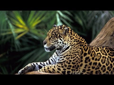 Brésil, le Pantanal avec Brazil Ecotour