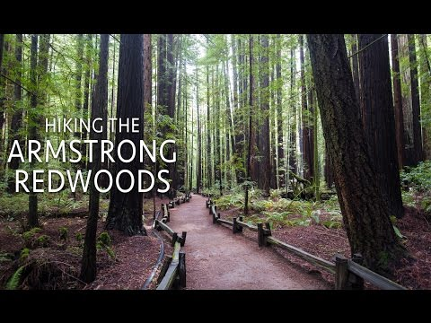 Armstrong Redwoods State Natural Reserve: Hiking the Pioneer Nature Trail