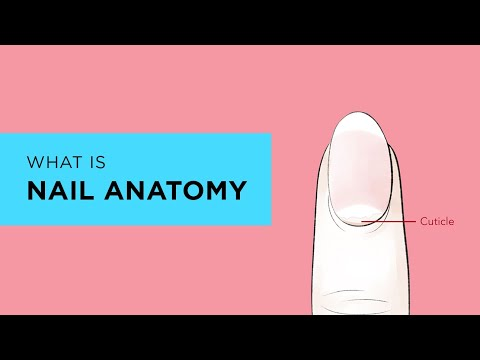 What is the Anatomy of a Nail