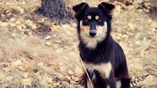 "Хочу собаку. Дворняга | Телеканал ""Мама"""