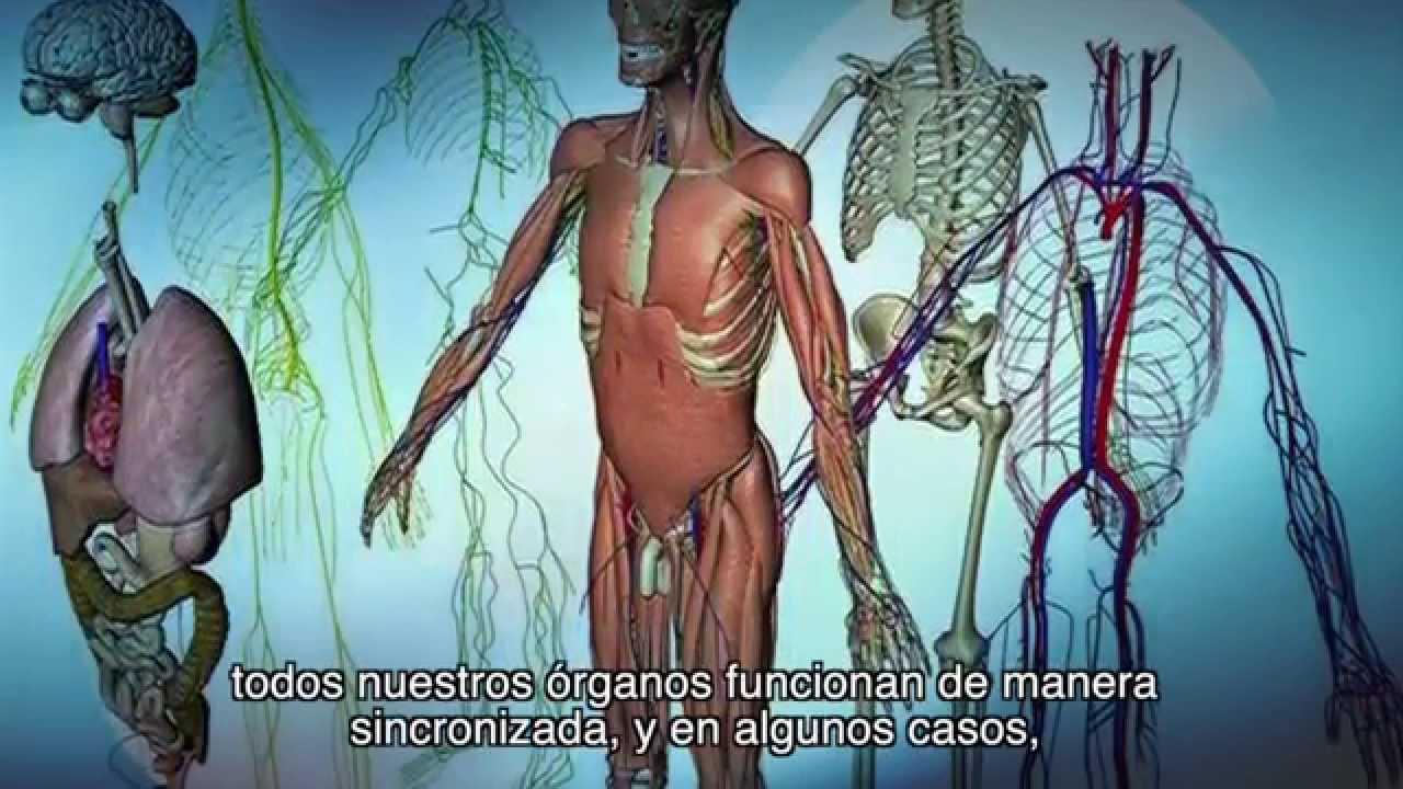 Interrelaciones entre aspectos anatómicos, fisiológicos de los ...