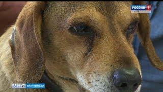 В Тверской области началась вакцинация домашних животных от бешенства