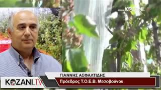 Χαμηλές οι αποζημιώσεις του ΕΛΓΑ στο Μεσόβουνο από τον παγετό