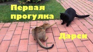 Кошки. Первая прогулка котенка Дарси.