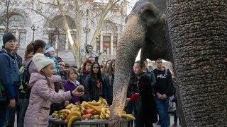 Жители Симферополя кормили немецких цирковых слонов