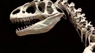 Dinosaurs fit in between warm and cold blooded animals