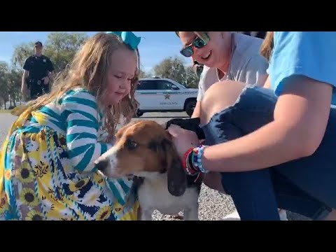 Junior, a lost dog rescued & reunited with his family