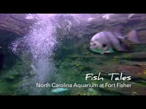 Go With The Flow...NC Aquarium At Fort Fisher - Kure Beach, NC