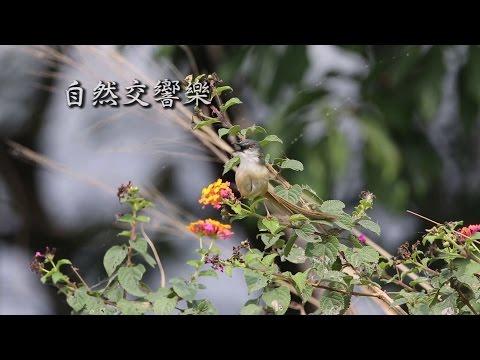 香港生物多樣性系列 - 自然交響樂