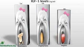 Jakým způsobem snižuje rostlinná strava hladiny IGF-1?