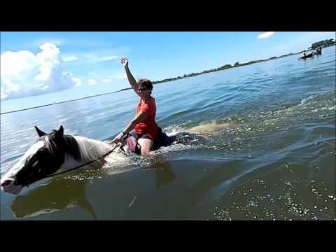 Cponies Beach Horseback Rides St Petersburg Florida Skyway Bridge