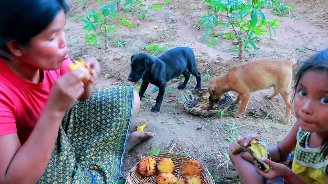Primitive Life Village - Mother catches fish - Cook pineapple and fish Eating delicious Puppies