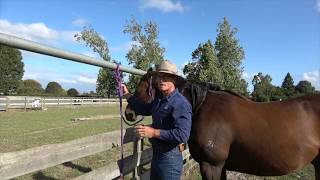 """""""What knot to know around horses"""" - the Bankrobber's Knot"""