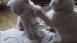 котята устраивают перегоны