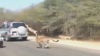 Как правильно убегать от Хищника \ How to run away from a predator