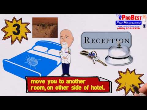 Bed Bugs Control in Arizona - Probest Pest Management / (480) 831-9328 - How bed bugs travel -