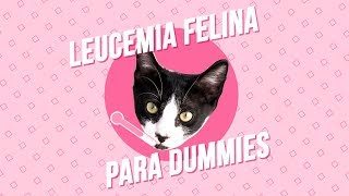 Leucemia felina. ¿Tu gato puede curarse?