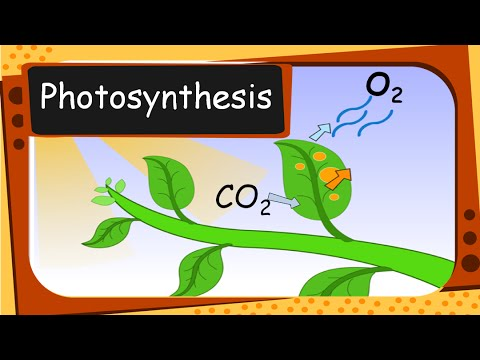 photosyn thesis Photosynthesis is a chemical process through which plants, some bacteria and algae, produce glucose and oxygen from carbon dioxide and water, using only light as a source of energy.