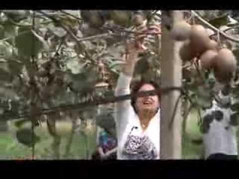 Cooperativa sociale futura maropati coltivazione kiwi for Kiwi coltivazione