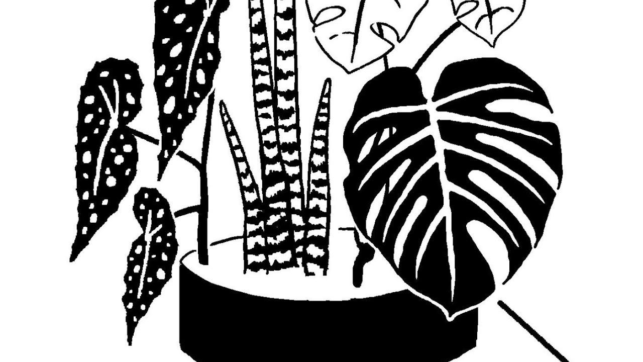 Episode 124: plant health, herbs and sustainability with Maya Thomas #Herbalmedicine