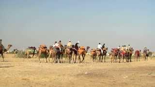 Camel caravan in Jaisalmer