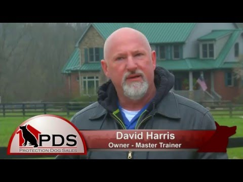 Child Abduction Scenario  Training Protection Dog Sales