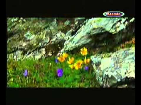 muzica de iarbă din varicoză