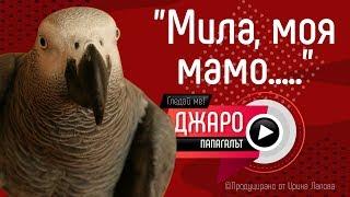 """Папагалът Джаро - """"Мила, моя мамо....."""""""