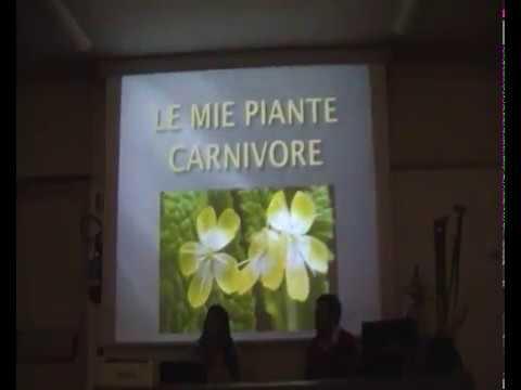 La collezione di Rita Corino