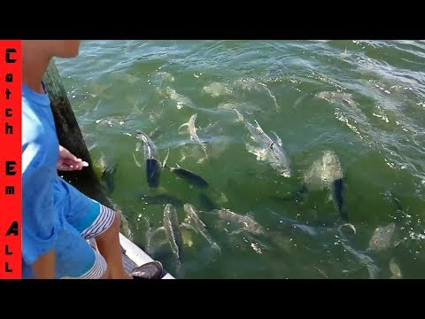 Massive School of Fish RIPPING EVERYTHING to PIECES! Secret Spot