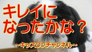 KiSSWann(キッスワン) 詳しくは⇒⇒⇒http://kisswann.com 『マルチーズの...