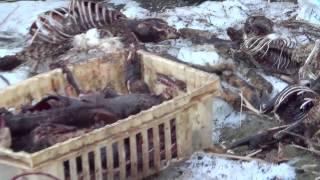 В канале возле с. Калининское найдены трупы животных