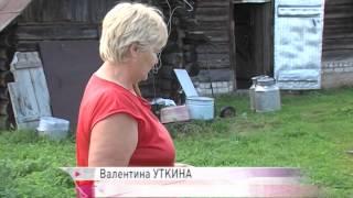 Больные бешенством енотовидные собаки атаковали Первомайский район