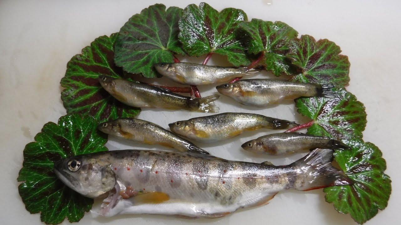 山で釣った魚と山菜で天丼を作る
