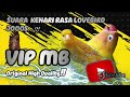 Suara Kenari Isian Lovebird Cocok Buat Masteran  Mp3 - Mp4 Download