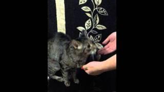 Котейка просится на руки